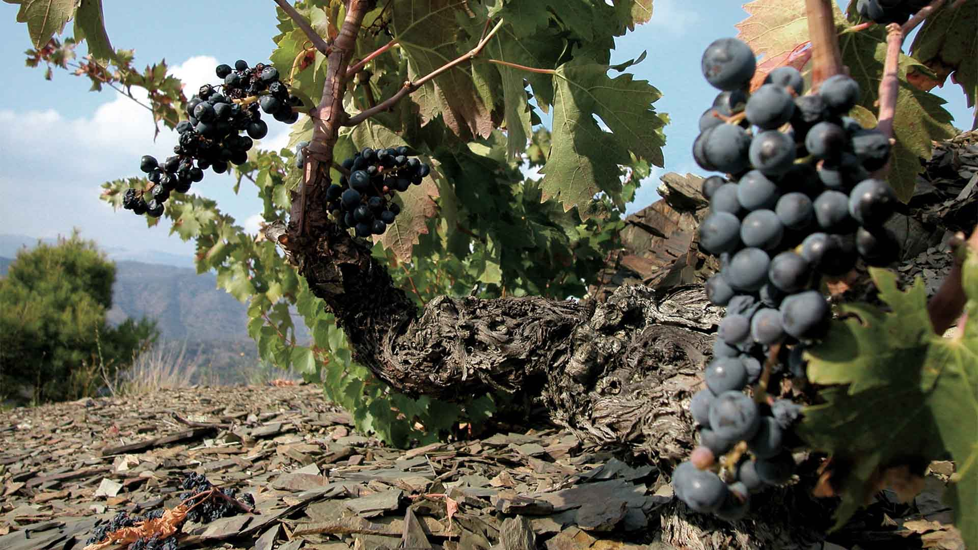 PRIORAT WINE TASTING TOUR