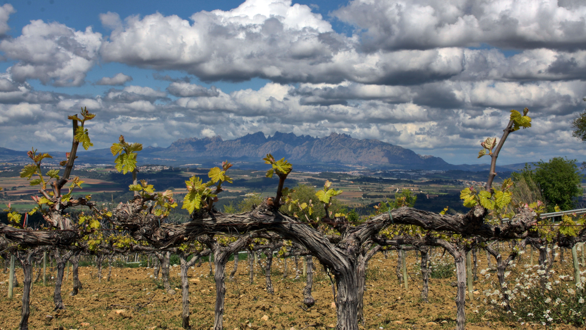 barcelonabyroad_winetour_penedes-14