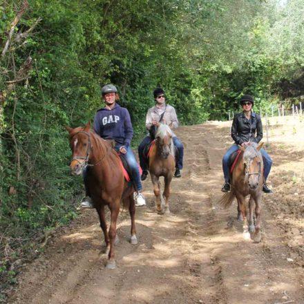 Horseback_WineTour_BCNbyRoad